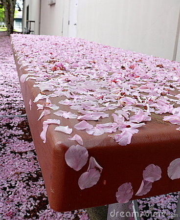 Blooming cherry madness on a table