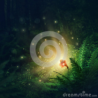 Free Blooming Fern Flower Royalty Free Stock Photo - 98989865