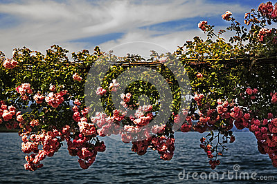Blooming flowers over lake