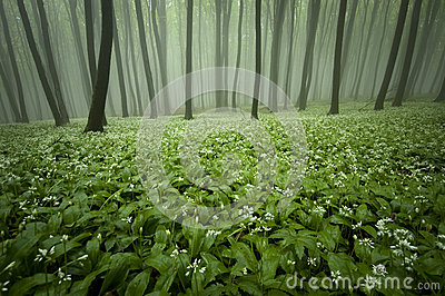 Blooming forest with fog and flowers on the ground