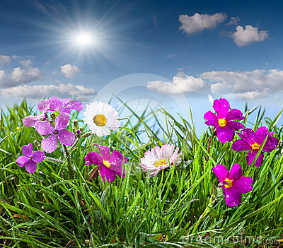 Blooming meadow under blue sky