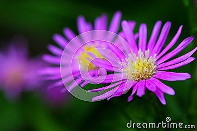 Blooming purple flowers