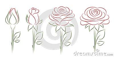 Blooming roses.