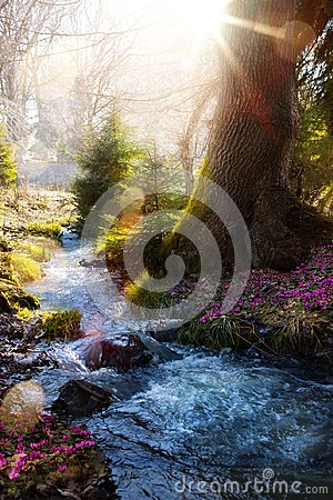 Free Blooming Spring Forest; Mountain Stream And Spring Flowers Stock Photo - 112518270