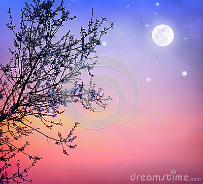 Free Blooming Tree Over Night Sky Royalty Free Stock Images - 30106139