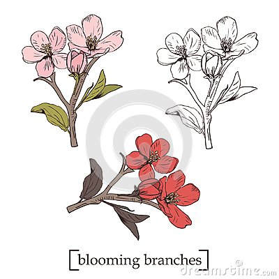 Free Blooming Tree. Set Collection. Hand Drawn Botanical Blossom Branches On White Background. Vector Illustration Stock Photography - 112702202