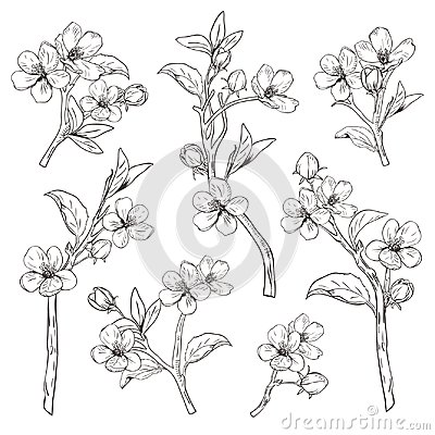Free Blooming Tree. Set Collection. Hand Drawn Botanical Blossom Branches On White Background. Vector Illustration Stock Photo - 112702530