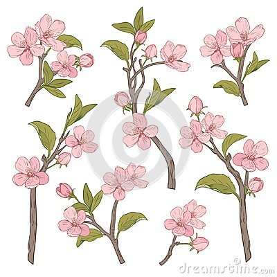 Free Blooming Tree. Set Collection. Hand Drawn Botanical Pink Blossom Branches On White Background. Vector Illustration Stock Photos - 113037183