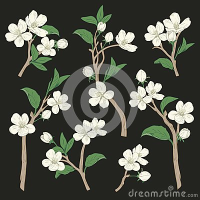 Free Blooming Tree. Set Collection. Hand Drawn Botanical White Blossom Branches On Black Background. Vector Illustration Stock Photography - 113037222