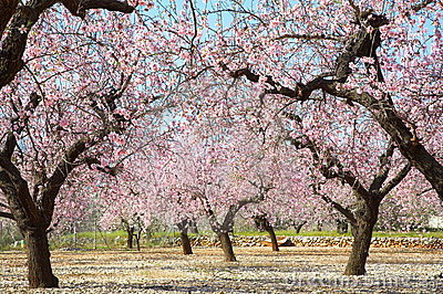 Blooming trees on field