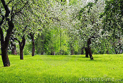 Blooming trees on green meadow