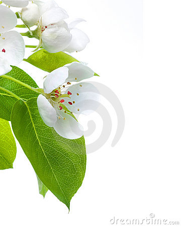 Free Blossom Stock Photos - 11804383
