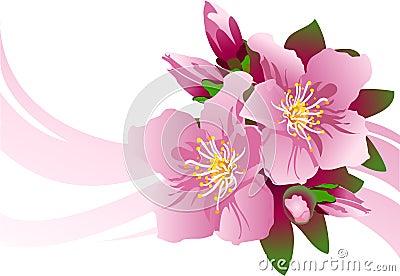 Blossom_aple