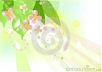 Blossom apple tree