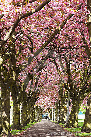 Blossom Avenue, Edinburgh