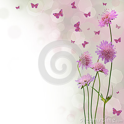 Free Blossom Background - Floral Border Stock Photo - 24686940