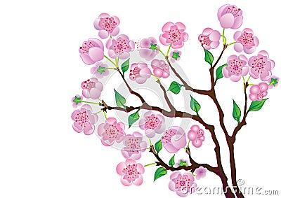 Blossom Branch.