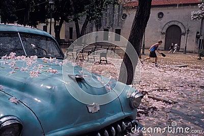 Blossom Car