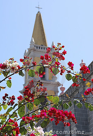 Blossom by Cathedral