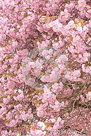 Blossom ceiling