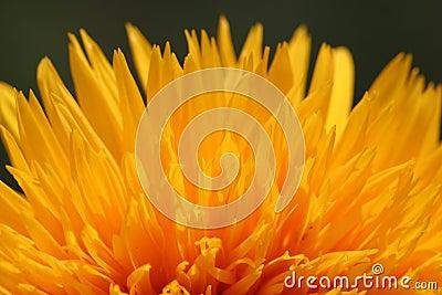 Blossom fire
