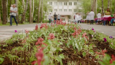 Blossom Flowerbed City Park People Group Talk stock footage