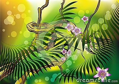 Blossom liana