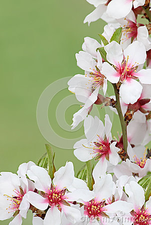 Blossom over green background