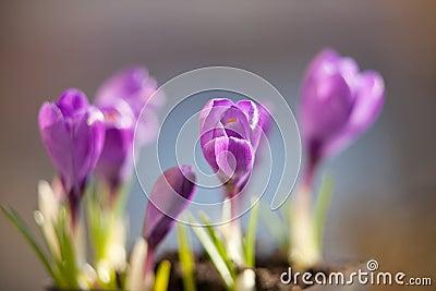 Blossom small flower