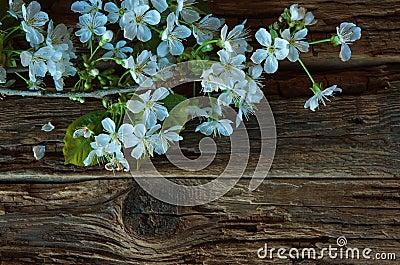 Blossom spring flowers