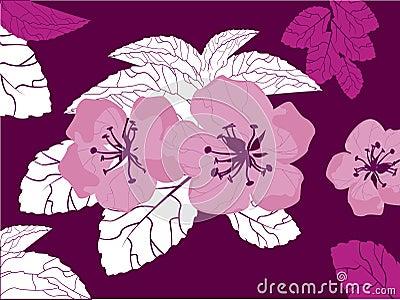 Blossom, vector