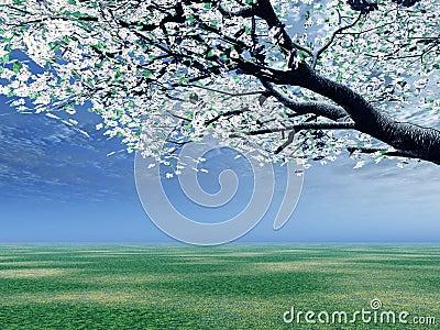 Blossoming cherry-tree