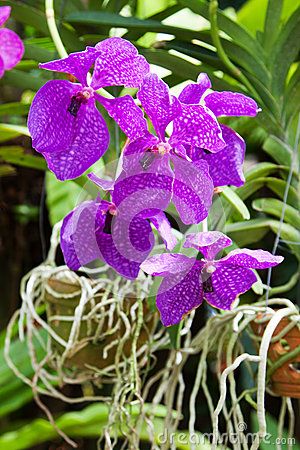Blossoming flower orchid