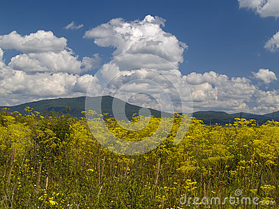 Blossoming meadow and the cloudy sky