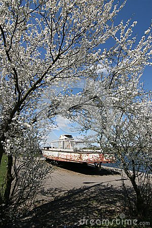 Blossoming tree and old motorboat