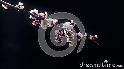 Blossoms against black background.