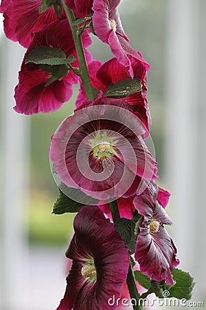 Blossoms on vine