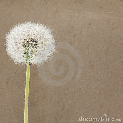 Blowball on Dirty Paper - Background