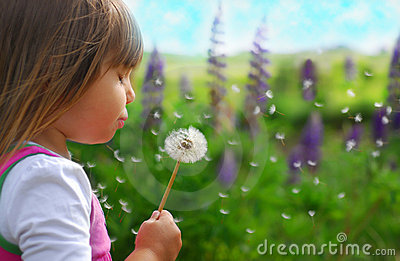 Blowing dandelion 3