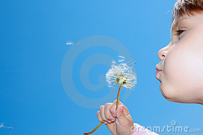 Blowing dandelions away
