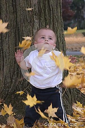 Blätter, die auf mich fallen