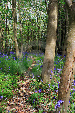 Blubell Woods