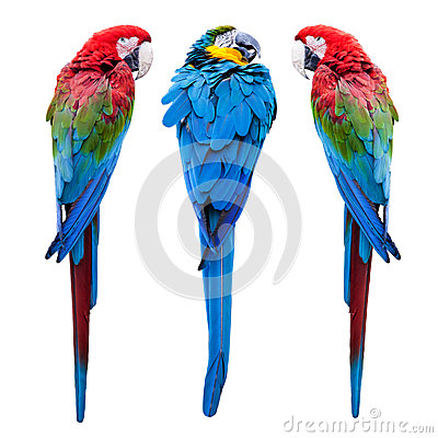 Free Blue And Red Macaw Stock Image - 60460751