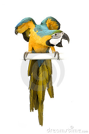Free Blue-and-yellow Macaw Royalty Free Stock Photos - 2237228