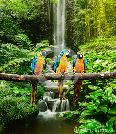 Free Blue-and-Yellow Macaw Stock Photography - 30724442