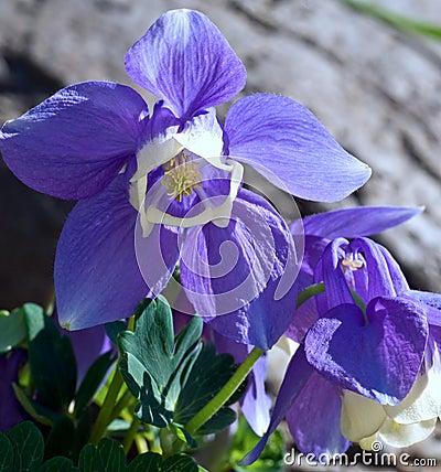 Bright blue flowers in bloom