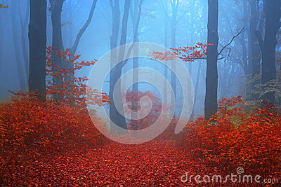 Blue atmosphere in a foggy forest with red leaves