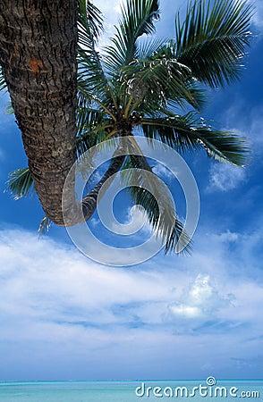 Blue atoll, french Polynésia