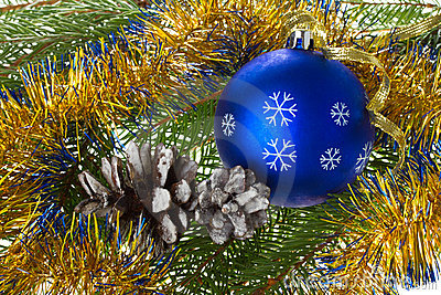 Blue ball and cones on fir tree branches