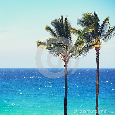Blue beach ocean palm trees background